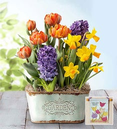 Bountiful Blooms Bulb Garden + Free Banner