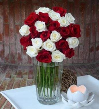 Two Dozen Red  White Combination Roses