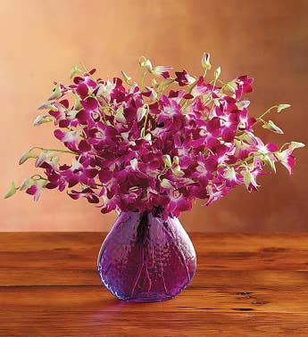 Exotic Breeze Orchids