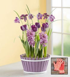 Precious Purple Mixed Bulb Garden + Free Gloves