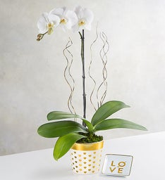 Heart of Gold Orchid