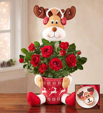 Red Rose Reindeer Plant
