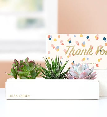 Thank You Succulents by Lulas Garden