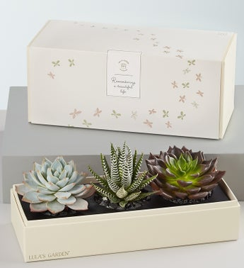 In Loving Memory Succulents by Lulas Garden
