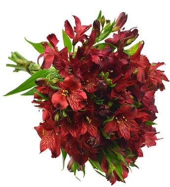 10 Stems of Red Alstroemeria