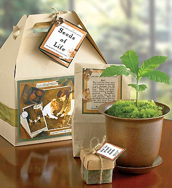 Seeds of Life Tree Kit for Sympathy