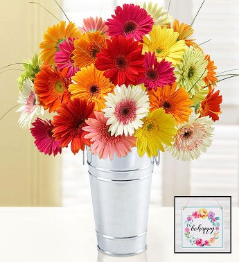 Happy Gerbera Daisies 12-24 Stems