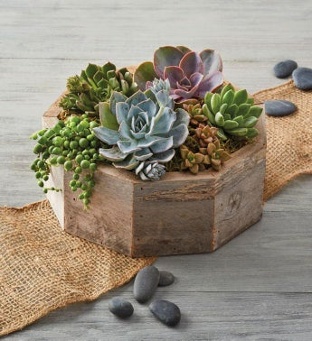 Reclaimed Wood Succulent Centerpiece