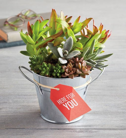 """Here for You"" Succulents"